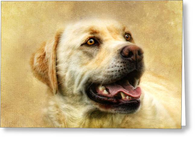 Cass Greeting Card by Trudi Simmonds
