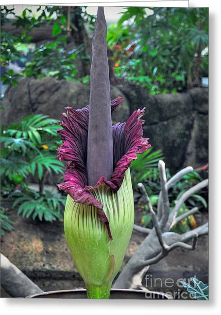 Corpse Flower Greeting Card