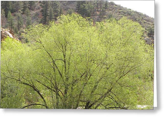 Tree Ute Pass Hwy 24 Cos Co Greeting Card