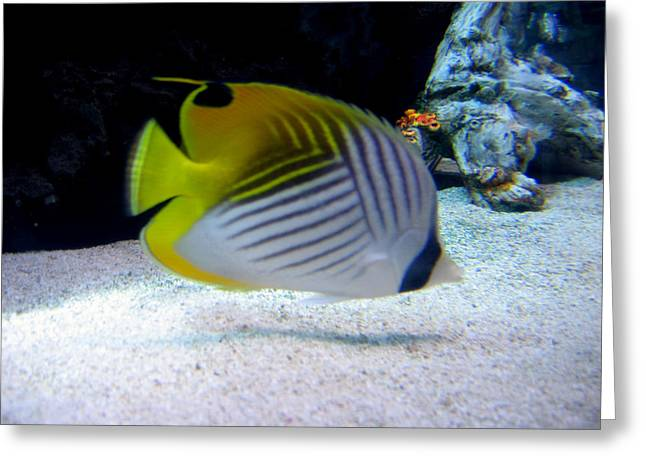 Greeting Card featuring the photograph  Fish by Suhas Tavkar