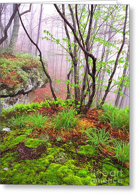 Foggy Spring Morning Greeting Card