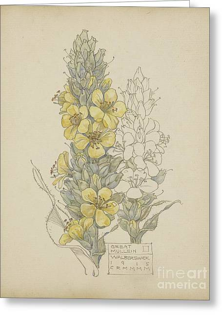 Great Mullein Greeting Card by Celestial Images