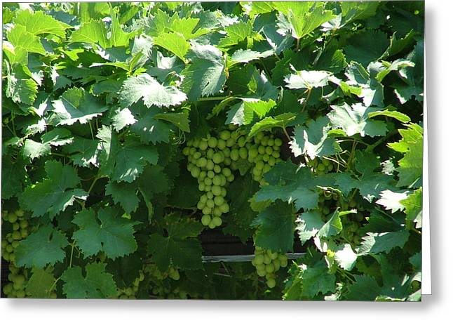 Green Grapes Greeting Card