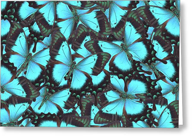Green Swallowtail Butterfly Greeting Card
