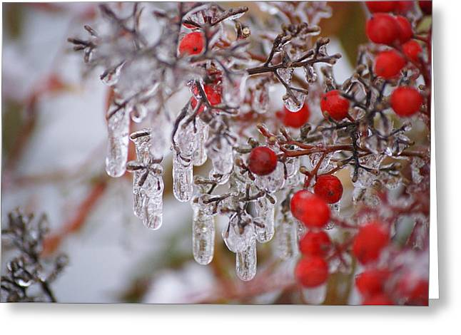 Greeting Card featuring the photograph  Holiday Ice by Heidi Poulin