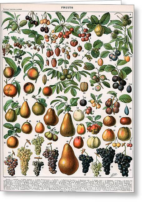 Illustration Of Fruit Varieties Greeting Card