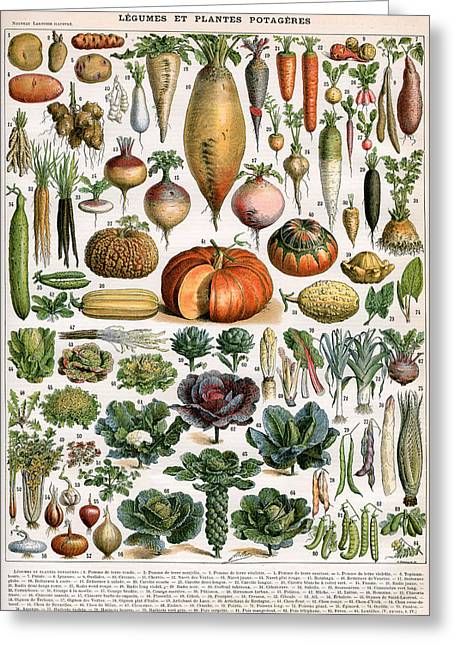 Illustration Of Vegetable Varieties Greeting Card