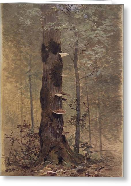 In The Woods Greeting Card by MotionAge Designs