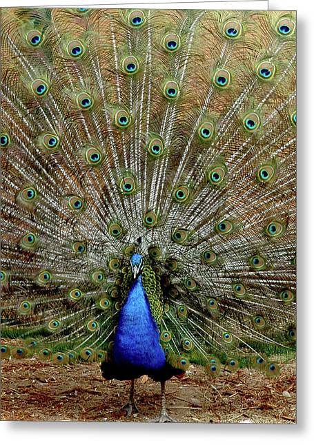 Greeting Card featuring the photograph  Iridescent Blue-green Plumage by LeeAnn McLaneGoetz McLaneGoetzStudioLLCcom