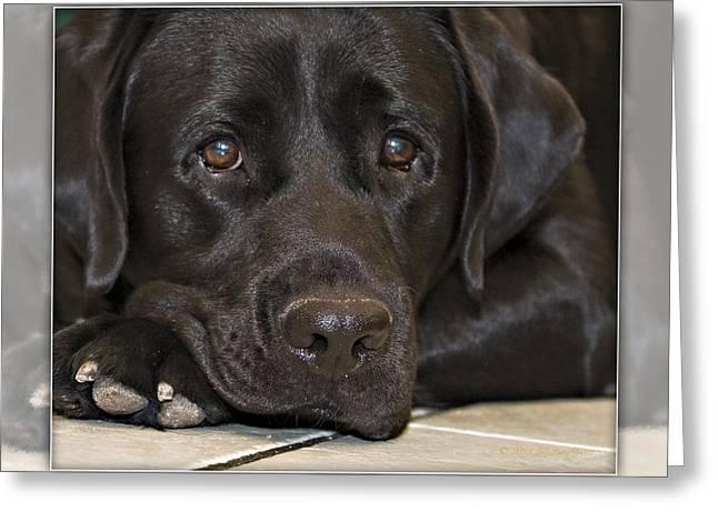 Labrador Retriever A1a Greeting Card
