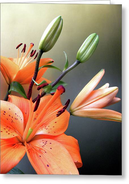 Framed Stamen Greeting Cards -  Lilies 2 Greeting Card by Julie Palencia