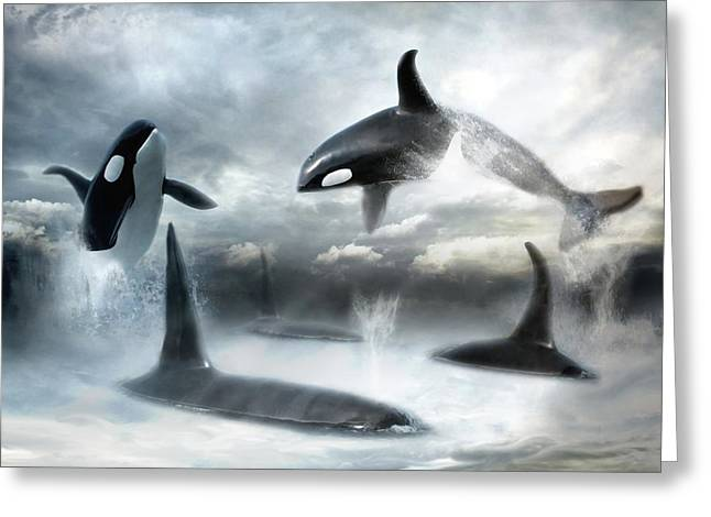 Killer Whale Greeting Cards -  Lost Horizons Greeting Card by Trudi Simmonds