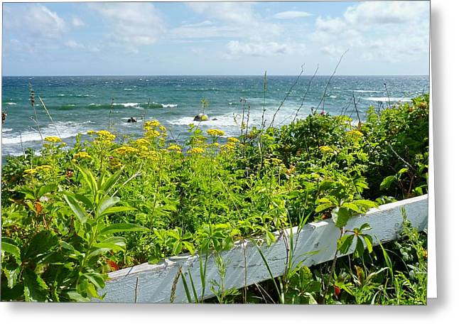 Manomet Point Greeting Card