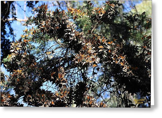 Monarch Large Cluster Greeting Card