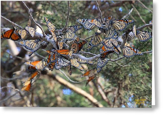 Monarch Mixed Cluster Greeting Card