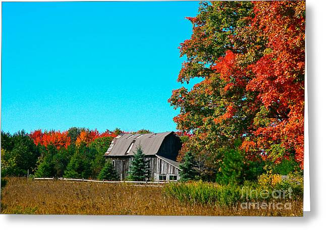 Old Barn In Fall Color Greeting Card