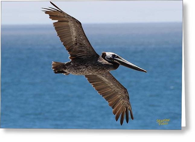 Pelican Flying Wings Outstretched Greeting Card