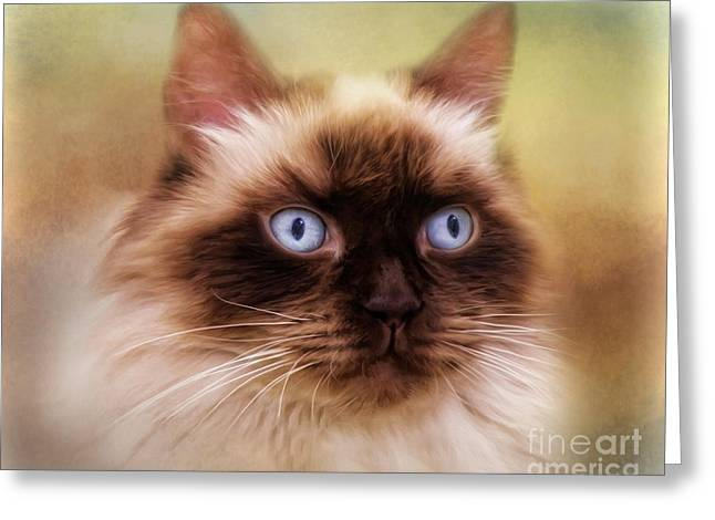 Greeting Card featuring the digital art  Ragdoll Cat by Trudi Simmonds