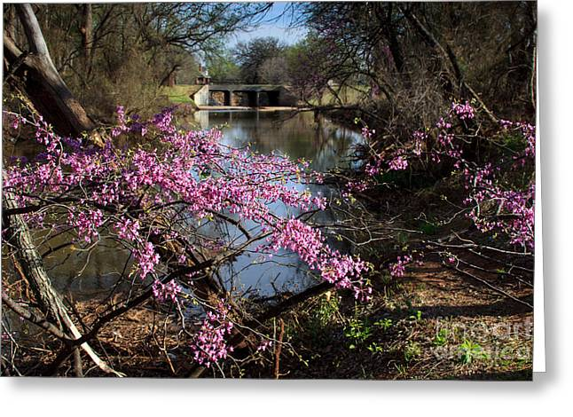 Redbuds And A Distant Bridge Greeting Card