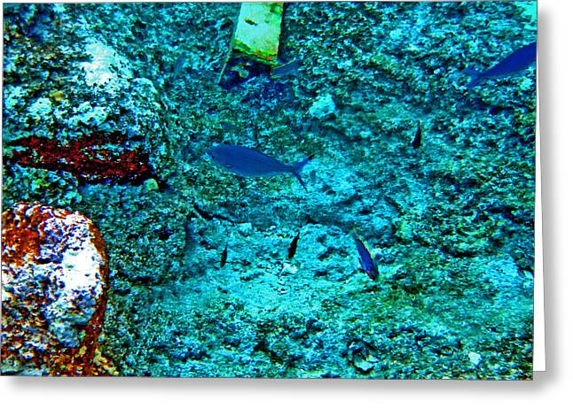 Sea. Rusty Iron And Blue Fish.    Greeting Card by Andy Za