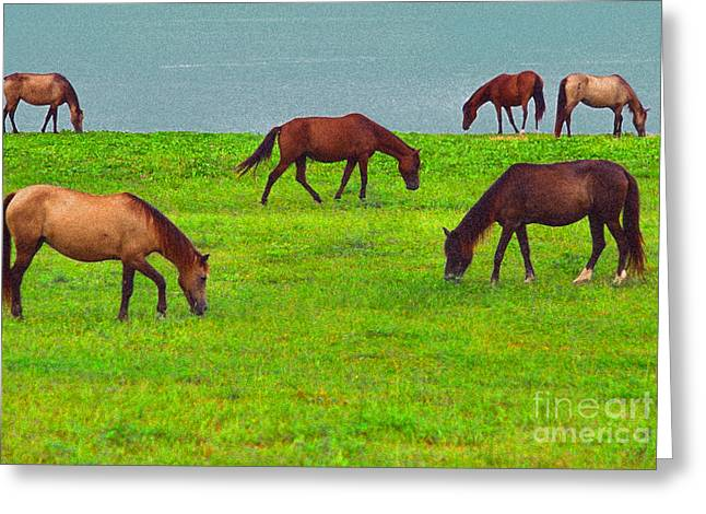 Seaside Grazing Greeting Card by Thomas R Fletcher