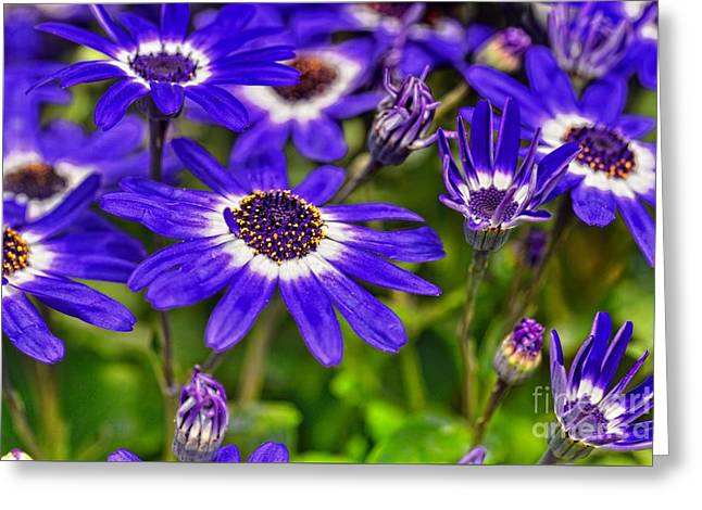 Senetti Flower Greeting Card by Igor Aleynikov