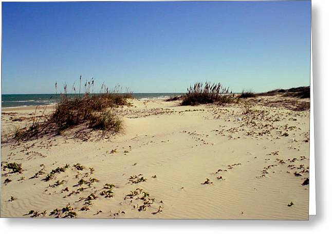 South Padre Island Dunes Greeting Card by Evelyn Patrick