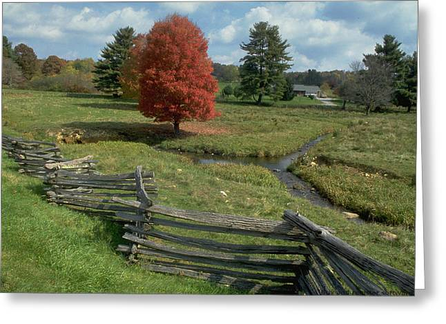 Split Rail Fence Greeting Cards -  Split rail fence Greeting Card by Carl Purcell