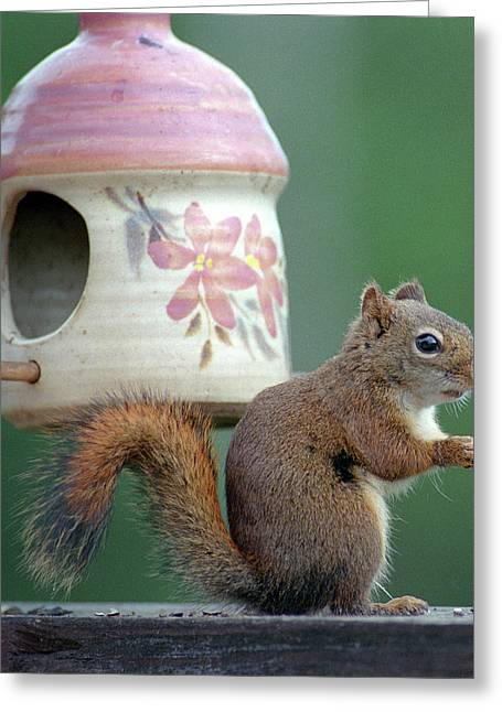 Squirrel Chatter Greeting Card