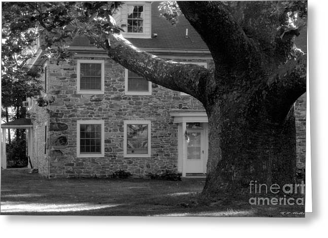 Stone House And A Large Sycamore Tree Greeting Card