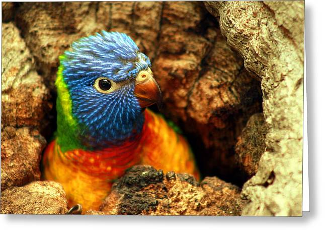 Rainbow Lorikeets Greeting Cards -  The World Outside My Door Greeting Card by Trudi Simmonds