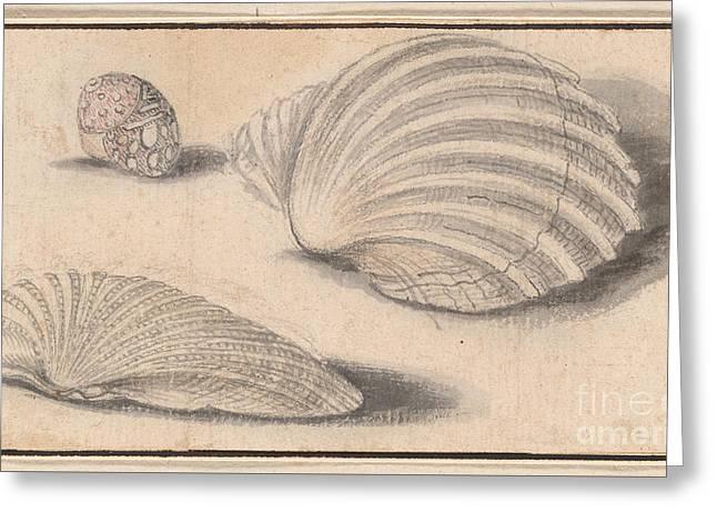 Three Shells Greeting Card