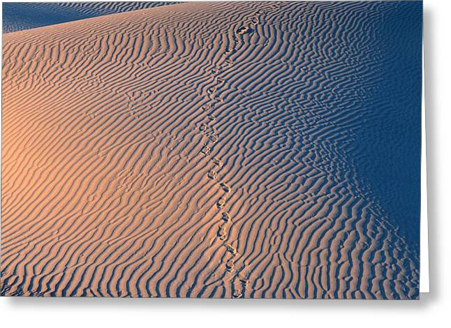 Tracks At First Light In Death Valley Greeting Card by Sandra Bronstein