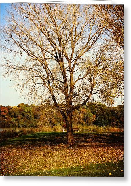 Wisdom Tree Greeting Card by Kyle West