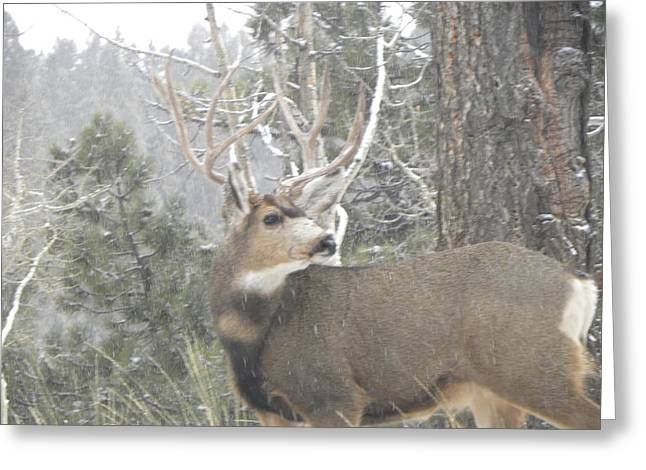 Buck Front Yard Divide Co Greeting Card