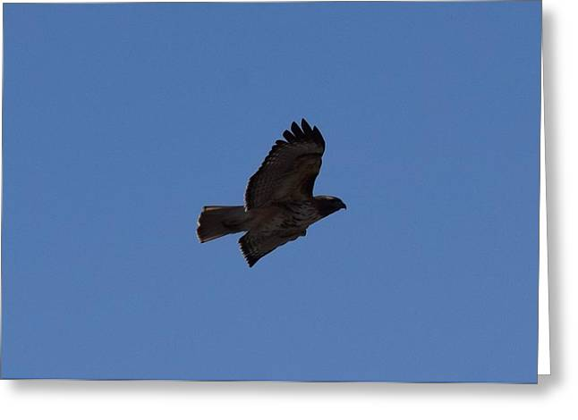 Greeting Card featuring the photograph Red Tail Hawk Male Tower Rd Denver Co 0898 by Margarethe Binkley