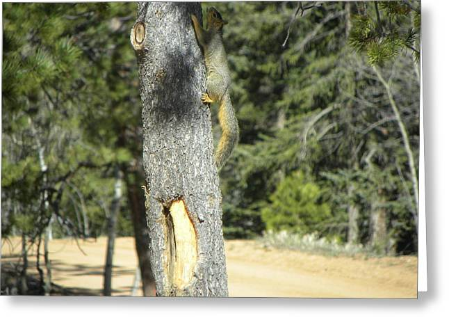 Squirrel Home Divide Co Greeting Card