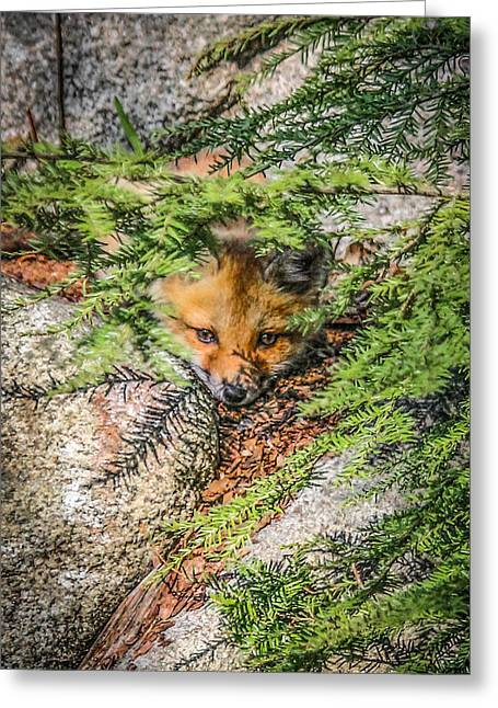 #0527 - Fox Kit Greeting Card