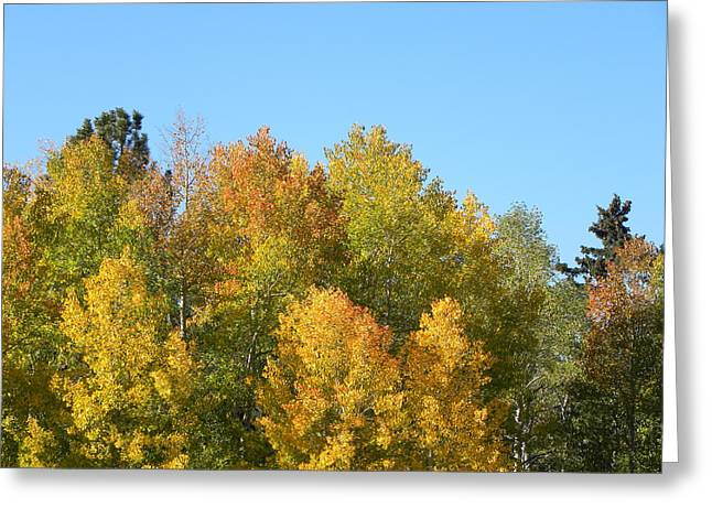 Greeting Card featuring the photograph Fall In Divide Co by Margarethe Binkley