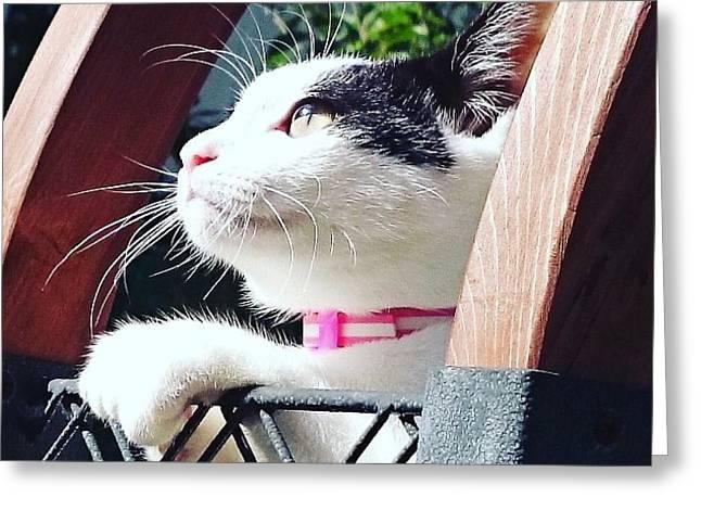 Koneko Means A Kitten Greeting Card