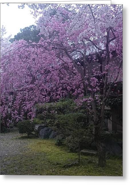 Shidarezakura Mean A Drooping Cherry Tree  Greeting Card