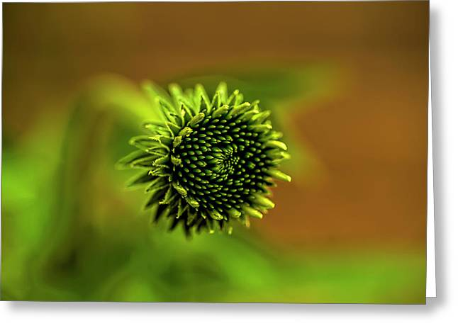 A Cone Flower Bud Greeting Card by Kay Brewer
