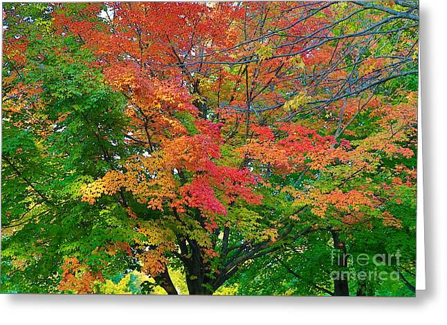 Greeting Card featuring the photograph A Michigan Fall by Robert Pearson