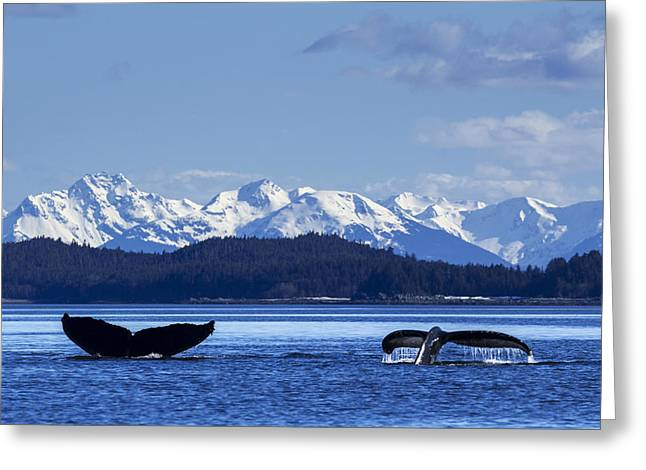 A Pair Of Humpback Whale Tails Greeting Card by John Hyde