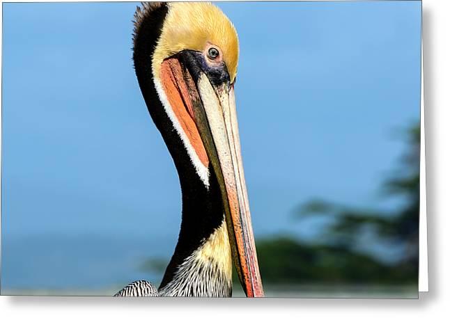 A Pelican Posing Greeting Card