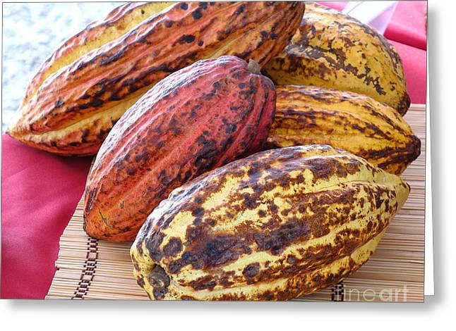 A Pile Of Cacao Pods Greeting Card