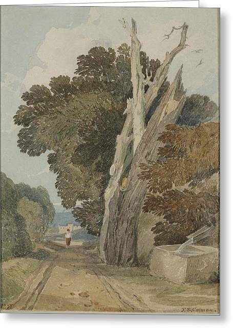 A Spanish Chestnut Tree Greeting Card by John Sell