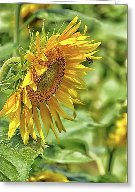 A Sunny Day Greeting Card by Mike Martin