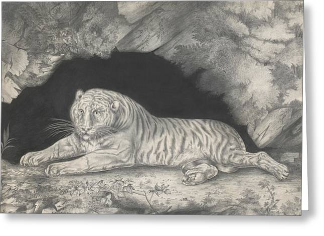 A Tiger Lying In The Entrance Of A Cave Greeting Card