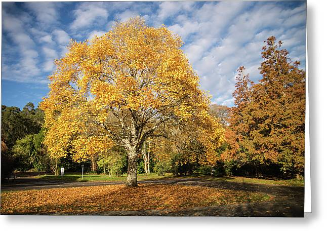 A Touch Of Autumn  Greeting Card by Martina Fagan